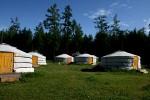 Gers im Camp Toilogt am Hovsgol-See